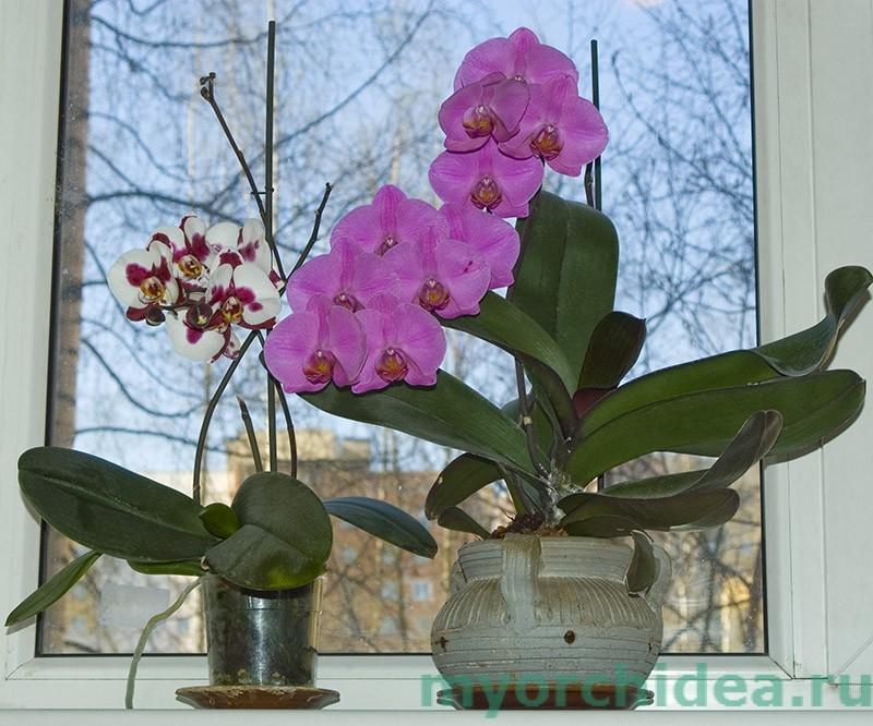 глиняный горшок с орхидеей  (справа) фото