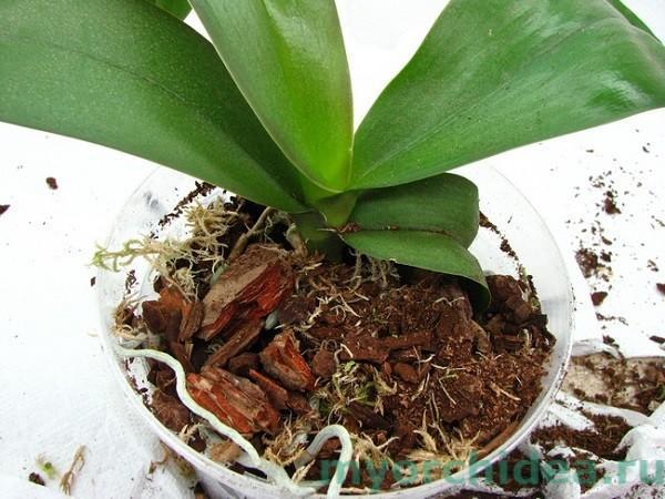 грунт для орхидей фото