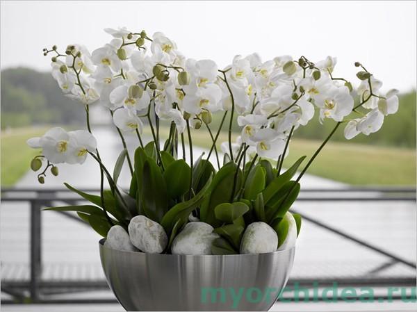 Уход за орхидеей фото