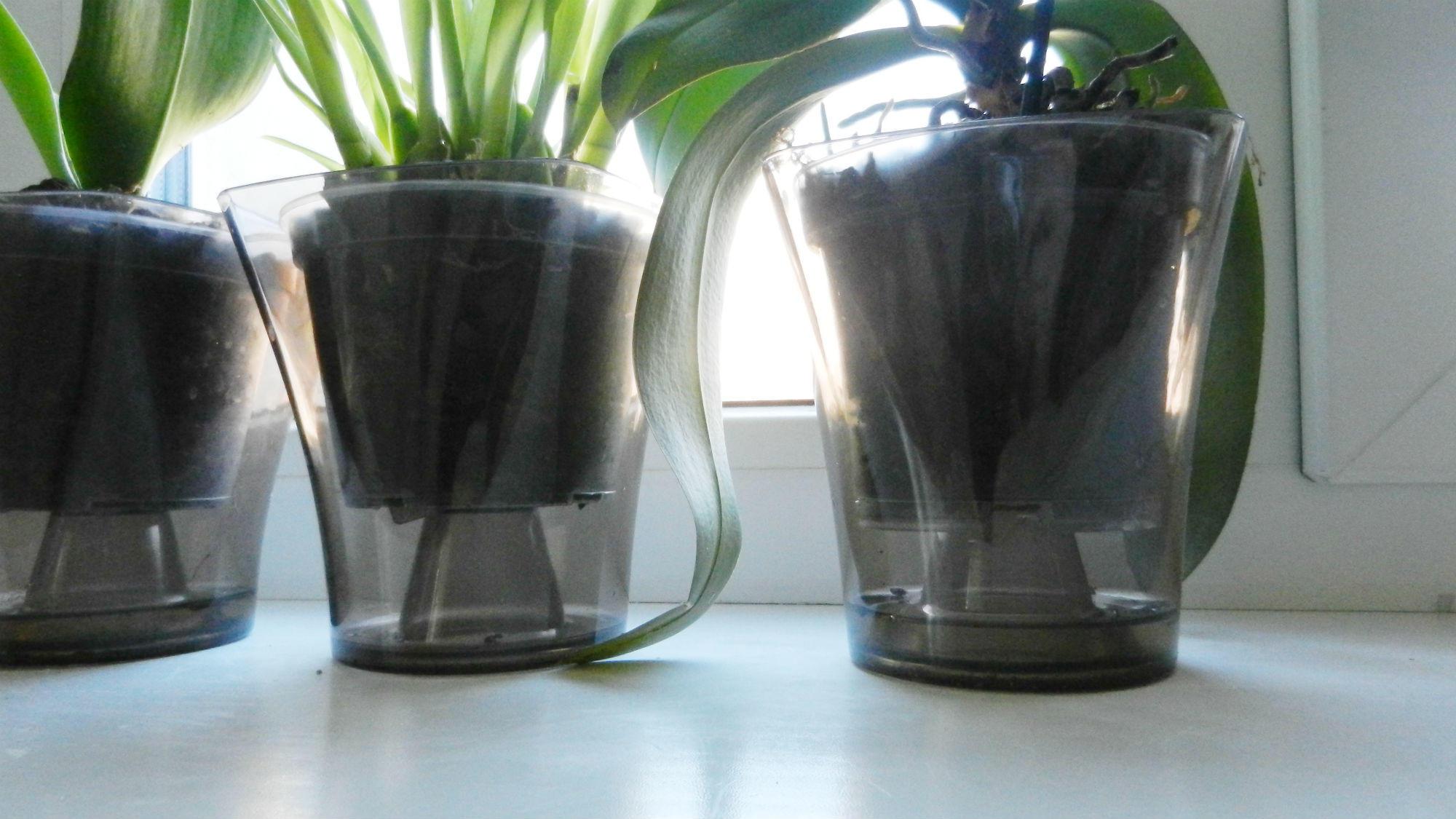 Неправильные горшки для выращивания орхидеи