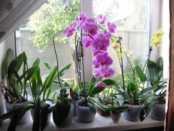 подходящее освещение для орхидей