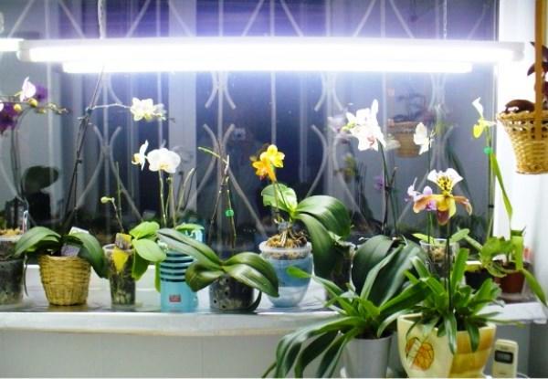 Подсветка цветов зимой на подоконнике