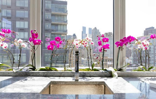 Малиновые и белые орхидеи на подоконнике