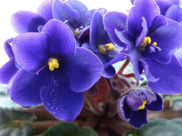 Основа здоровья цветка - правильный полив