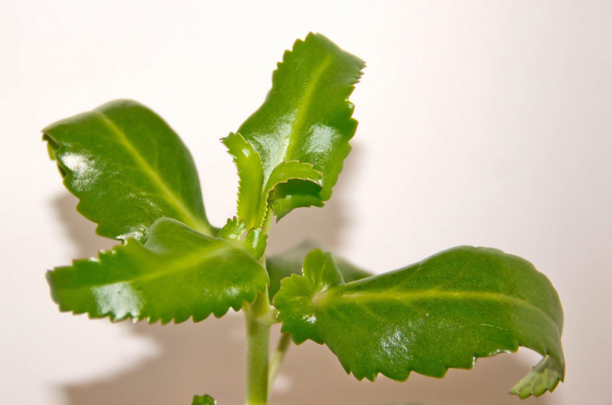 Слегка вялые листья растения фото
