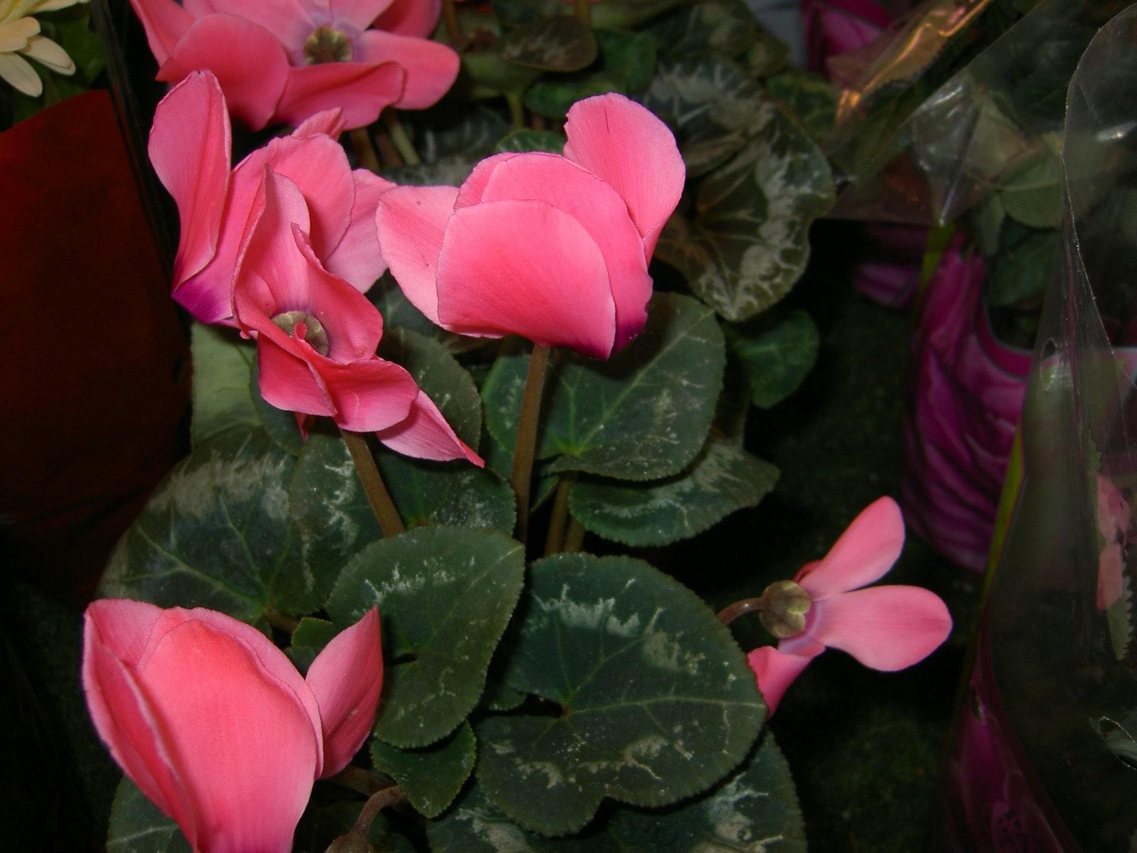 Красивое цветущее растение на снимке