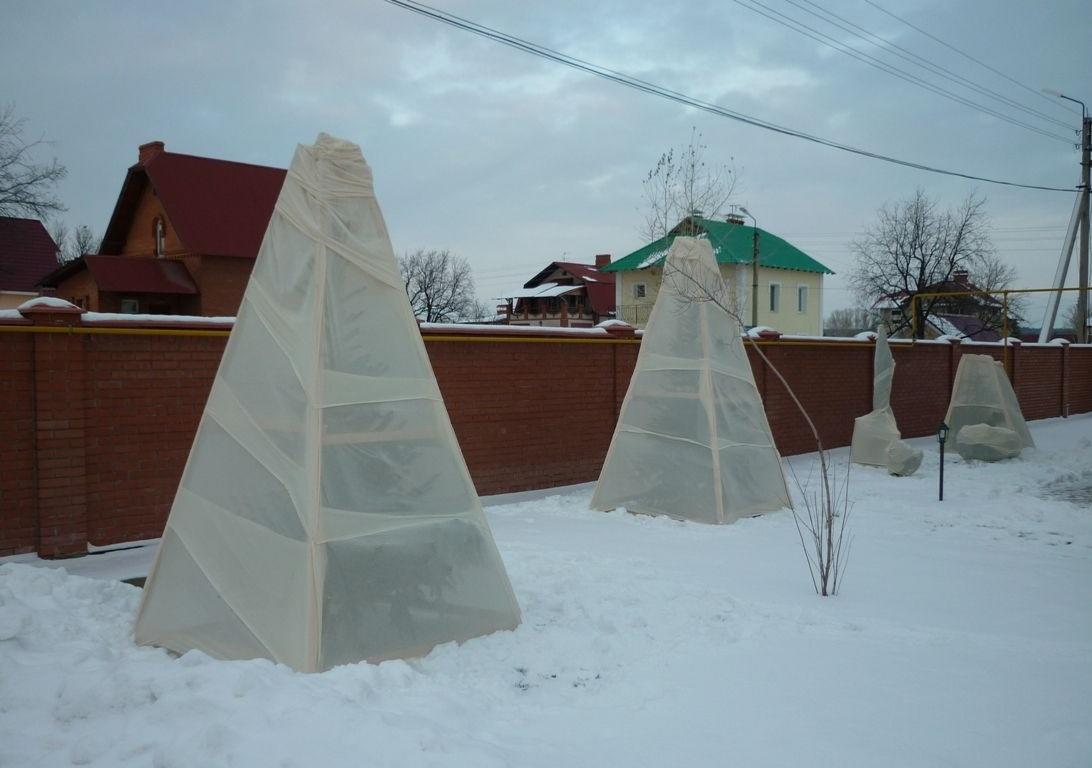 Надежное укрытие деревьев и кустарников от мороза