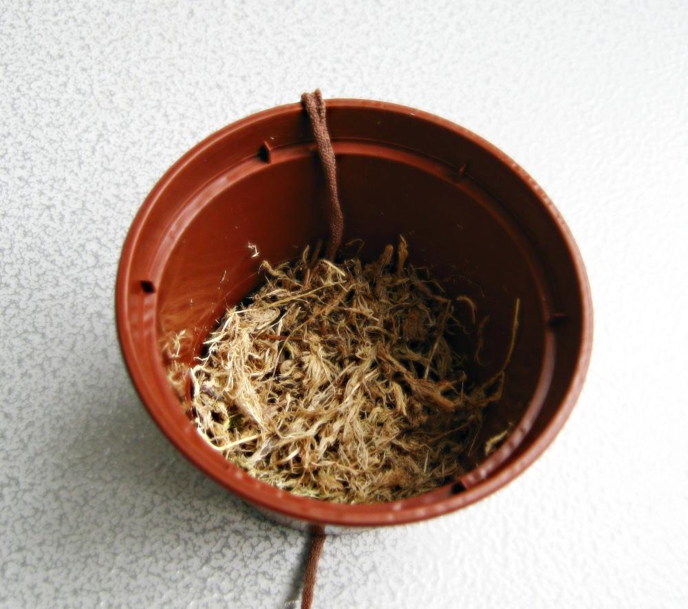 Подготовка горшка под пересадку