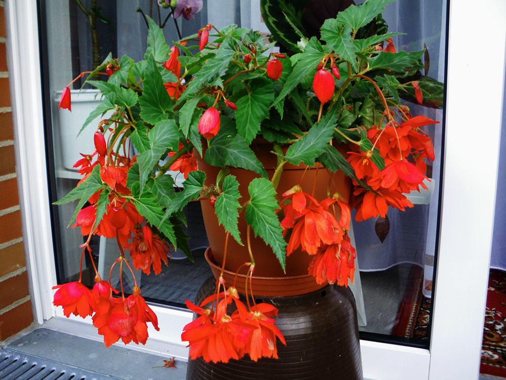 Красивое растение в периоде покоя