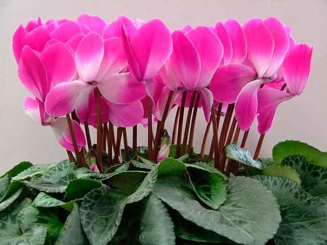 Цветущее растение на фото