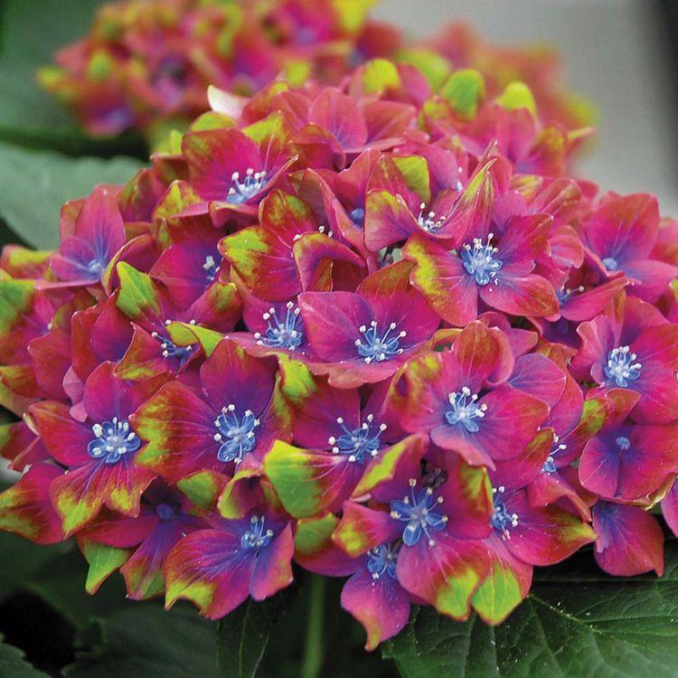Красивый цвет листьев цветка