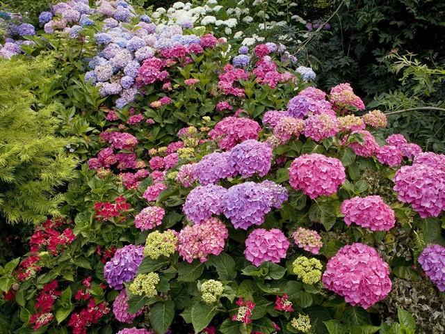 Несколько разных сортов цветка