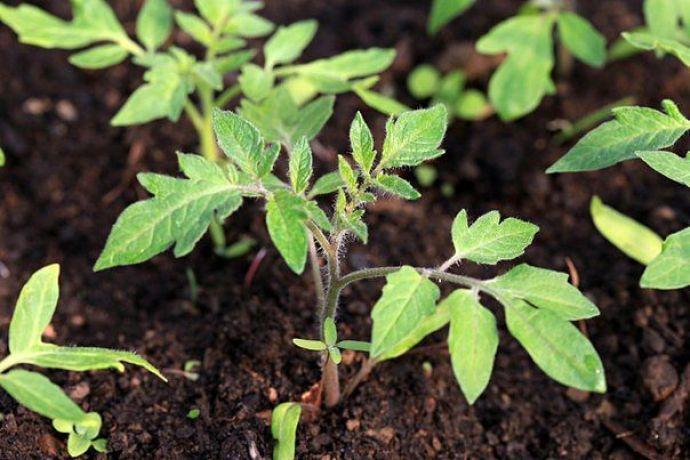 Удобренный грунт поможет вырастить здоровое растение