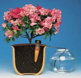 Интересный способ автоматического полива