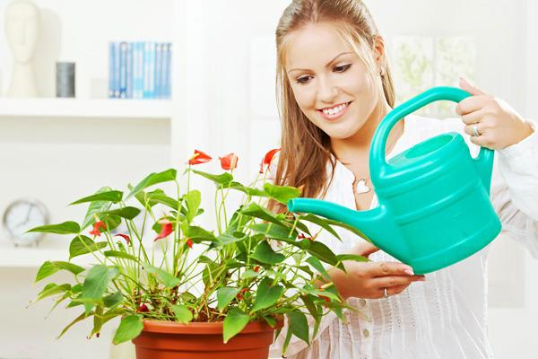 Девушка поливает комнатное растение