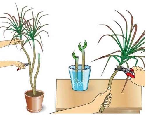 Обрезка растения на схеме
