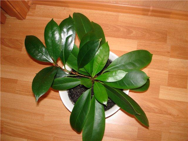 Растение в горшке на полу