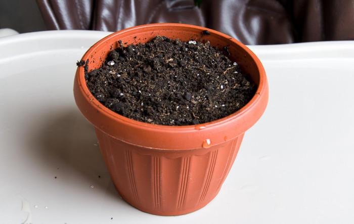 Горшок под для пересадки семян