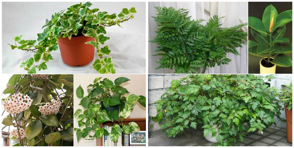 Коллаж из вредных комнатных растений