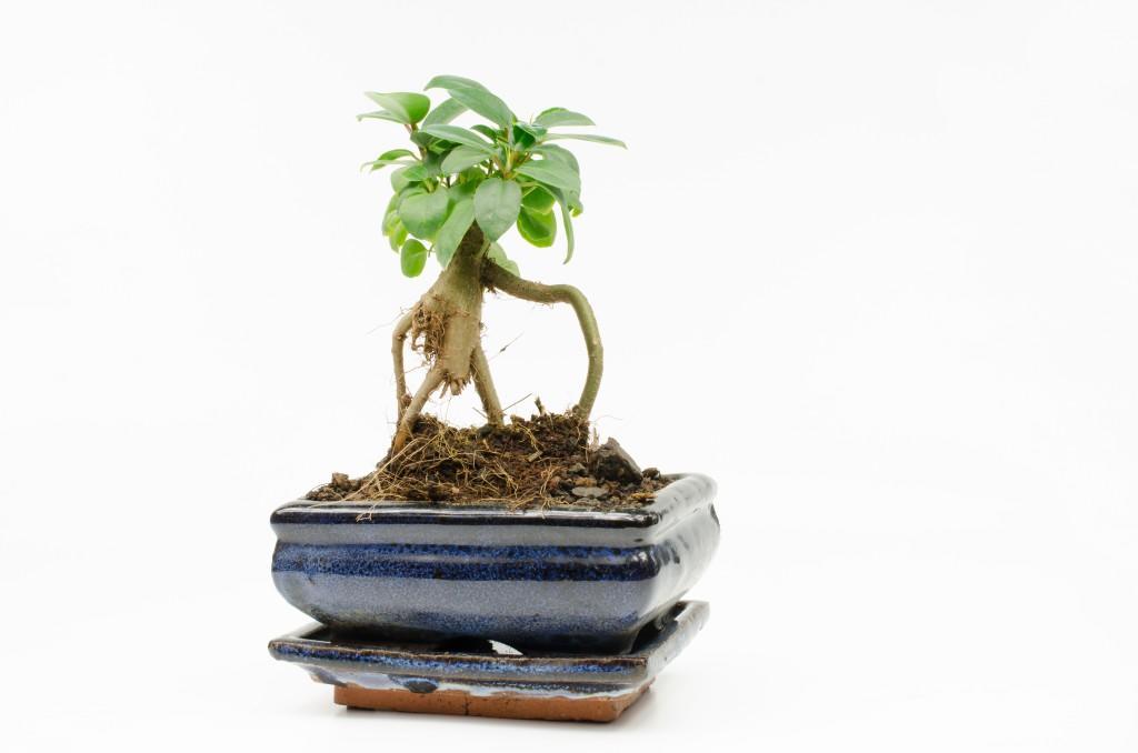 Растение в дизайнерском горшке