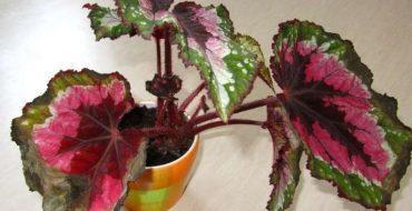 Цветок с засохшими листьями