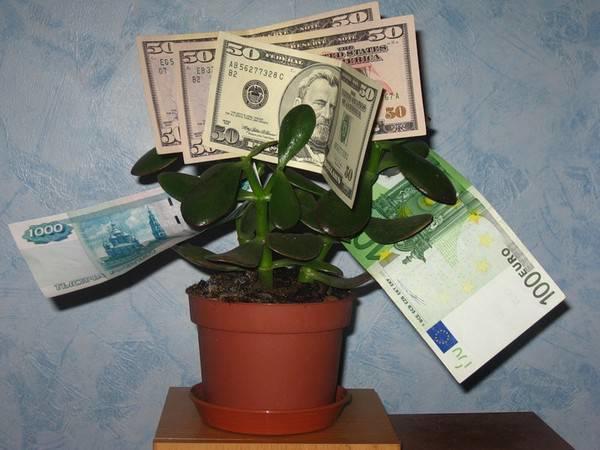 Толстянка увешана деньгами