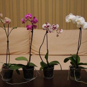 Цветы орхидеи в офисе