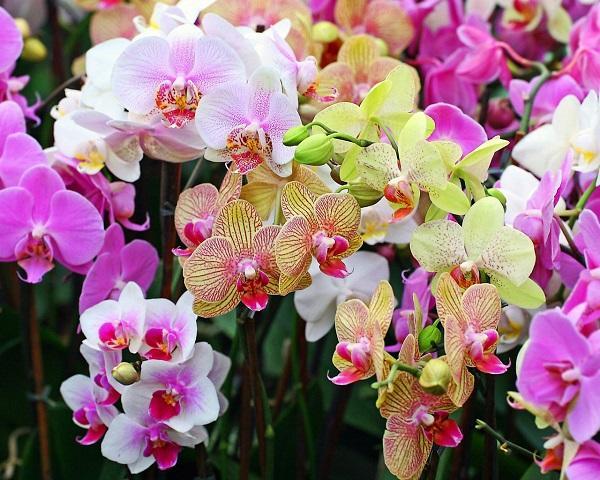 Разнообразные цветы орхидеи
