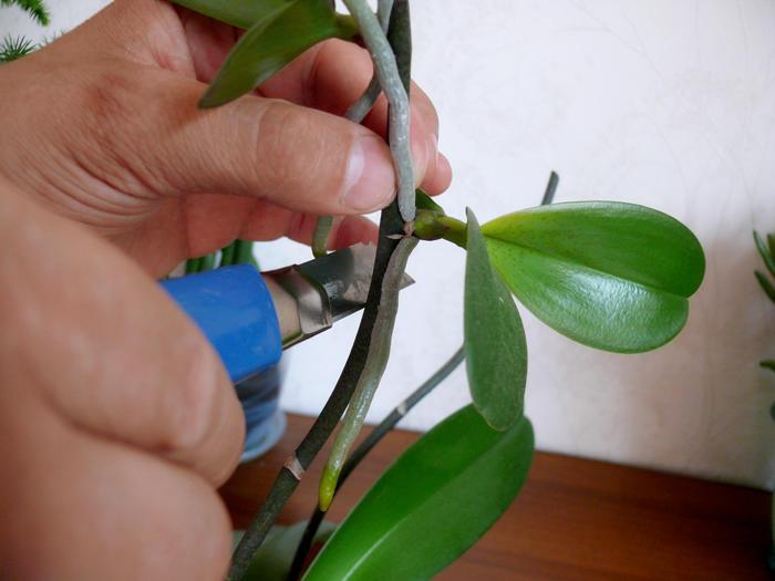 Отделение детки от растения