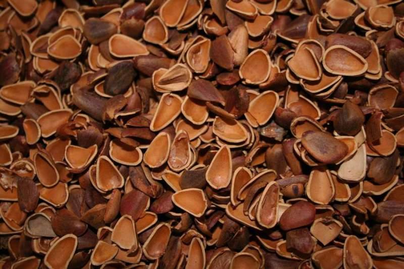 Остатки кедровых орехов как удобрение