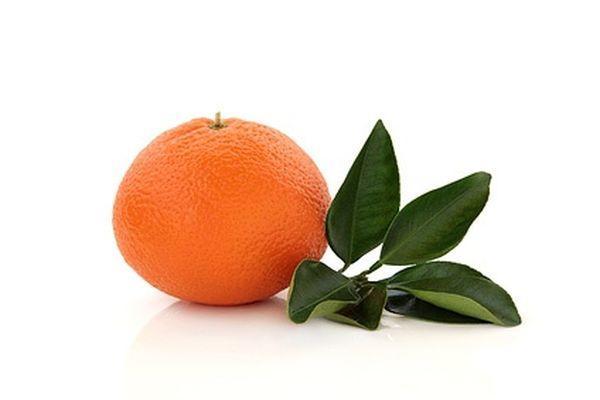 Тангора плодоносит фруктами среднего размера