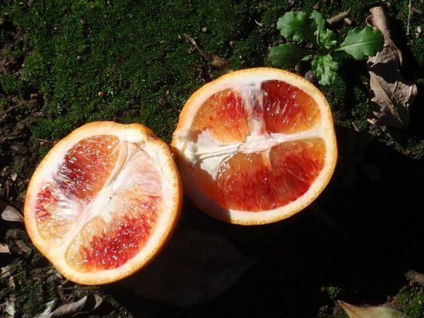 Сицилийский цитрус – это гибрид