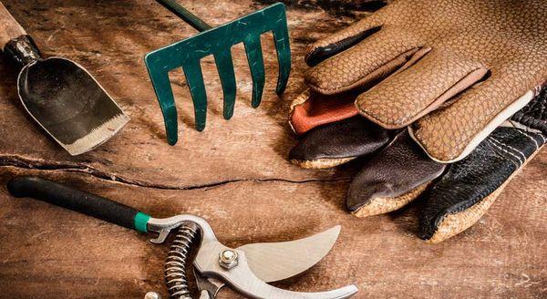 Перед привитием подготовьте инструменты