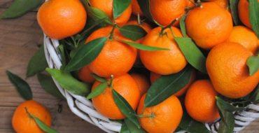В мире существует множество разновидностей мандаринов