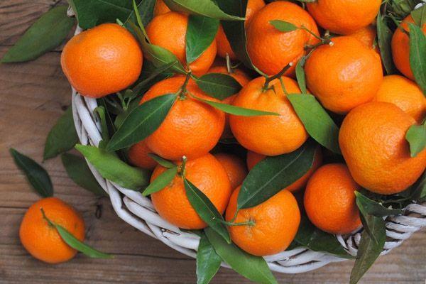 Мандарин: выращивание и уход в домашних условиях – Cельхозпортал
