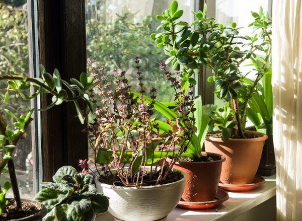 Растения для кухни: лучшие цветы для интерьера
