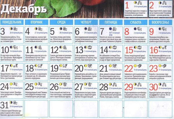 Лунный календарь цветовода на декабрь 2018 года