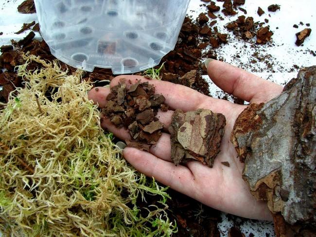 Сосновая кора и мох сфагнум – идеальный субстрат для комнатных орхидей