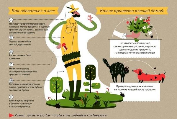 Комары, клещи и другие насекомые: когда они появляются и как защититься?
