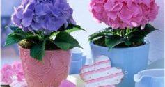 Чем и как поливать гортензию правильно, чтобы цветок вырос здоровым
