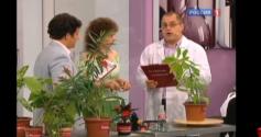 Полезные и вредные комнатные растения и цветы. Советы врача