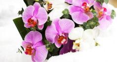 Как составить букет из орхидей своими руками